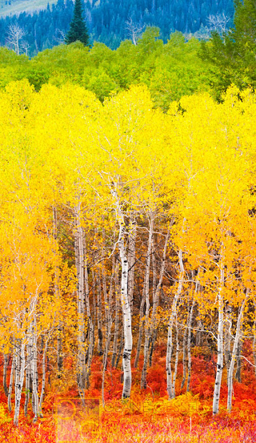 Fall colors foliage utah