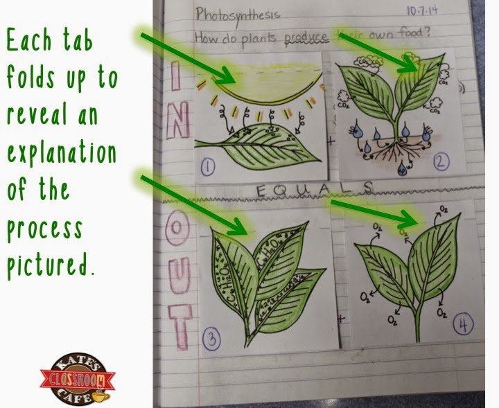 Kates science classroom cafe photosynthesis for interactive notebooks so i created some of my own diagrams and put them together to create an interactive notebook entry that teaches the photosynthesis equation ccuart Image collections