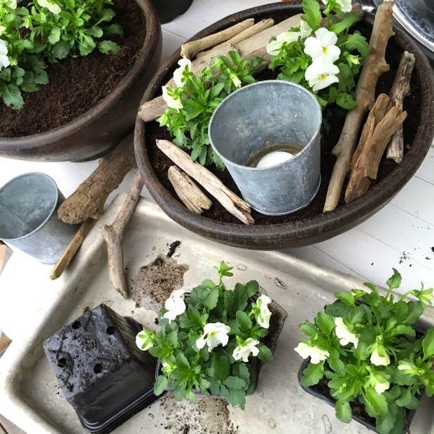 planteringstips pénseer