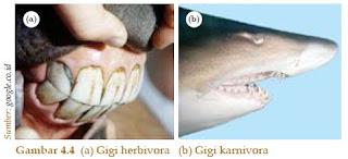 Bentuk gigi hewan