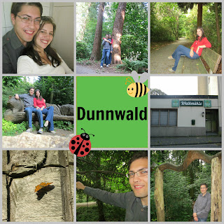 germany to-do dunnwald wald forest baum-pfad haan haus