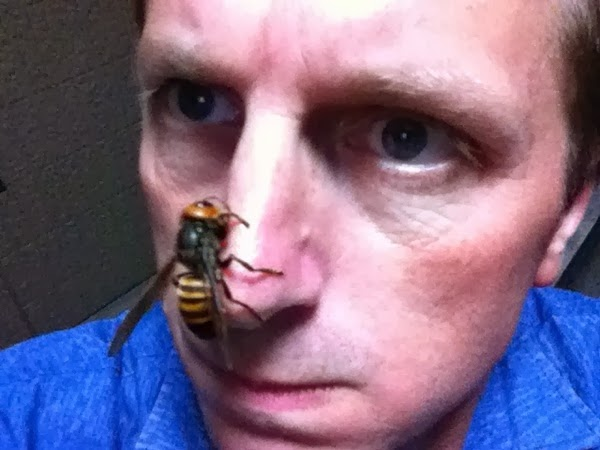 Giant Hornets Go on Mad Killing Spree in China
