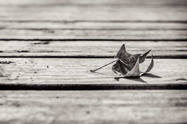 fall leaf on a dock