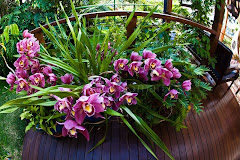 Orchids on our deck
