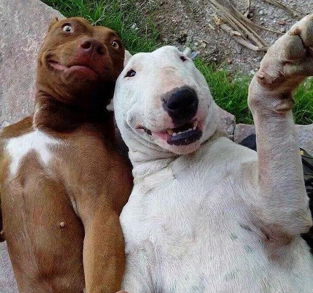 perro tomando un selfie con sus amigos