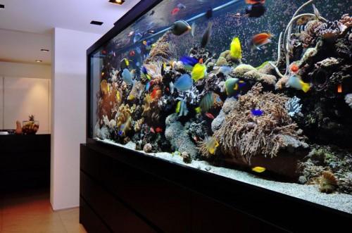 Home Aquarium Design