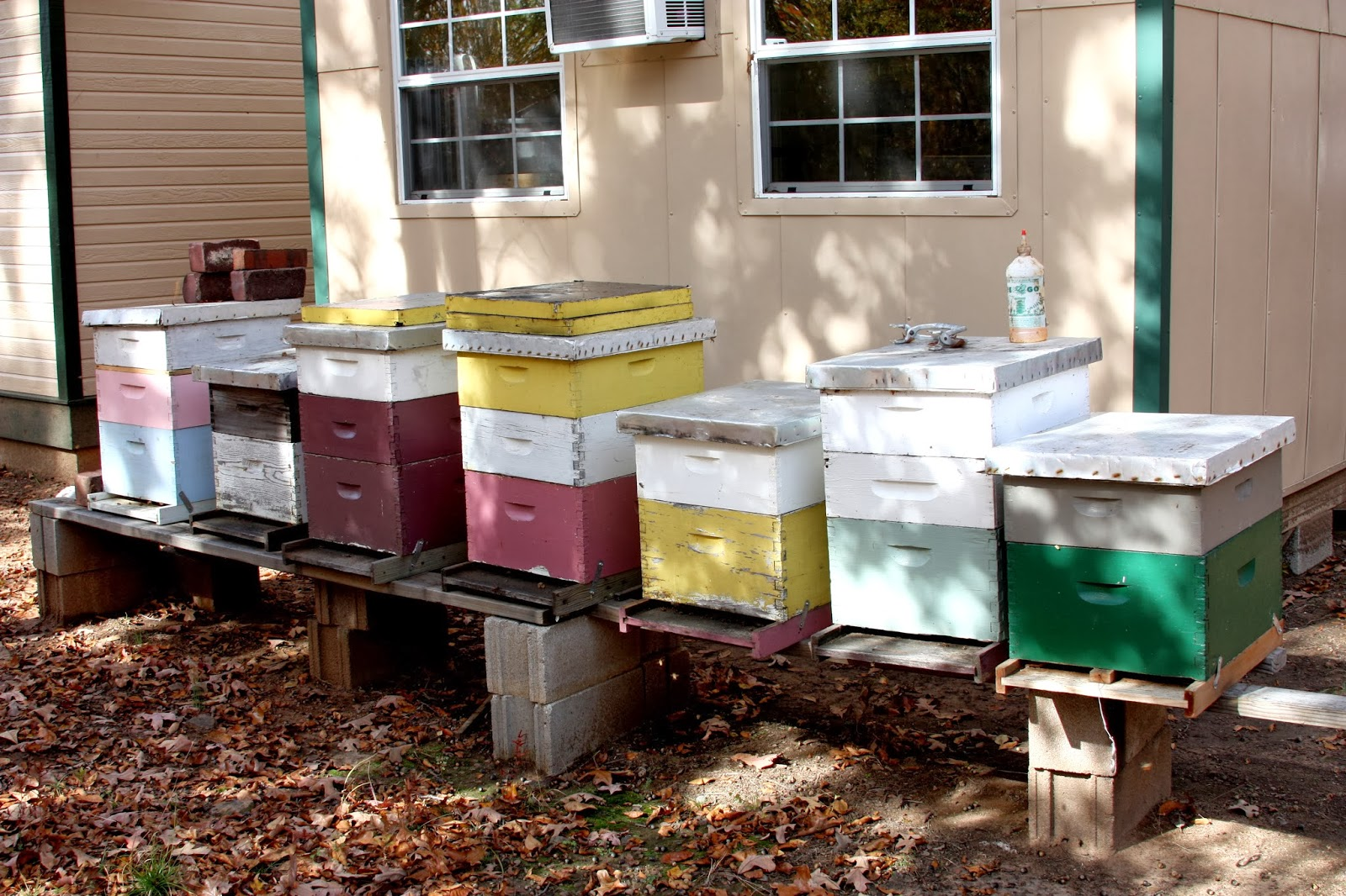 beekeeping is a popular hobby and if you enjoyusing honey on your
