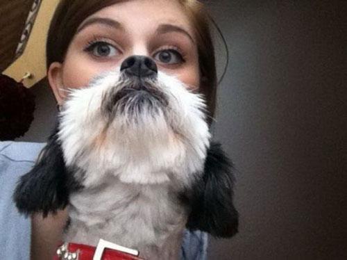 Pretty dog funny