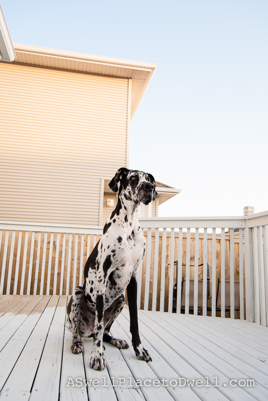 Diefenbaker on the deck