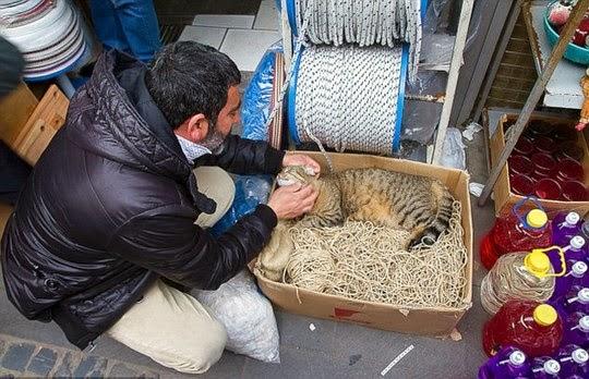stray cat of istanbul turkey