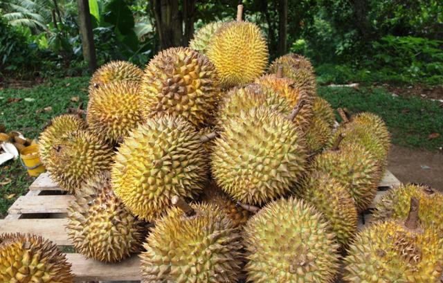 Manfaat Mengejutkan Dari Mengonsumsi Durian