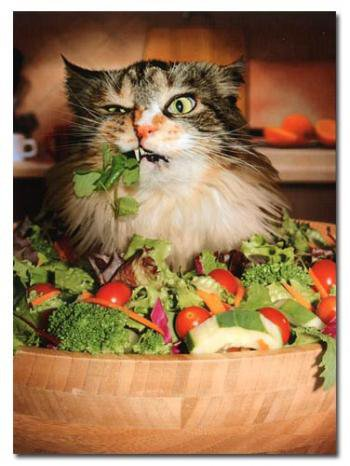 the fat diaries lol cat hating on lettuce. Black Bedroom Furniture Sets. Home Design Ideas