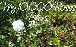 10.000 Roses