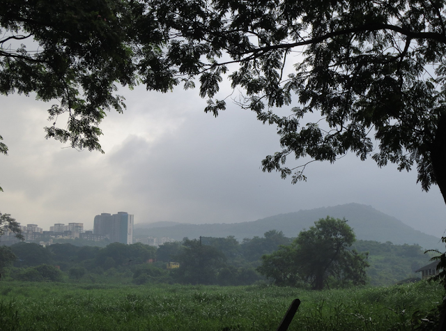 aarey milk colony mumbai india spectacular beauty