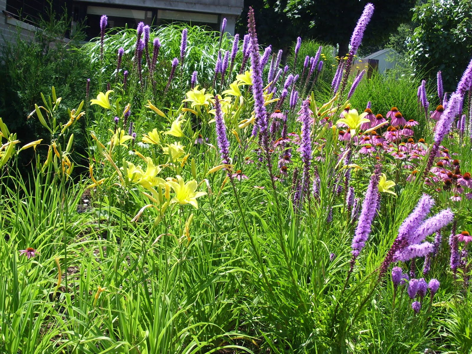Talking To Plants Underplanting And Groundcovers Some