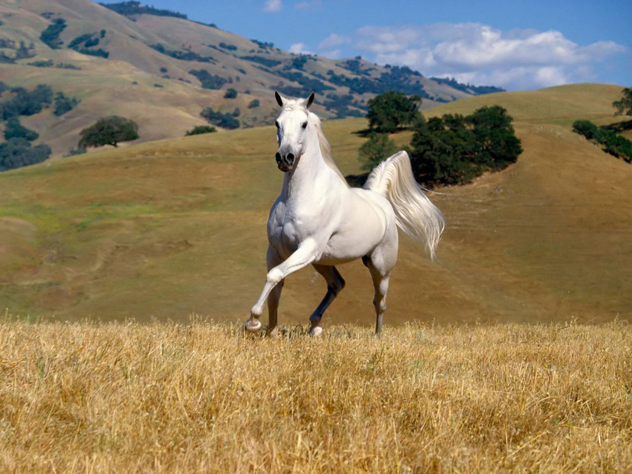 Download   Wallpaper Horse Couple - wild+horses+wallpapers+6  Snapshot_447988.jpg