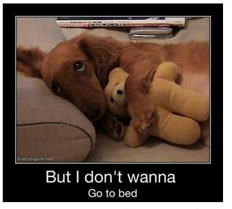 Dont Wanna Bed Funny Photo