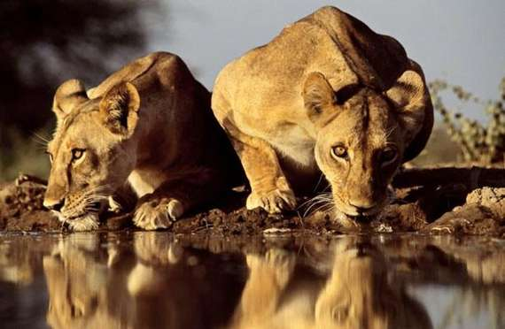 Cool And Amazing Photographs | Greg Du Toit Seen On www.coolpicturegallery.us
