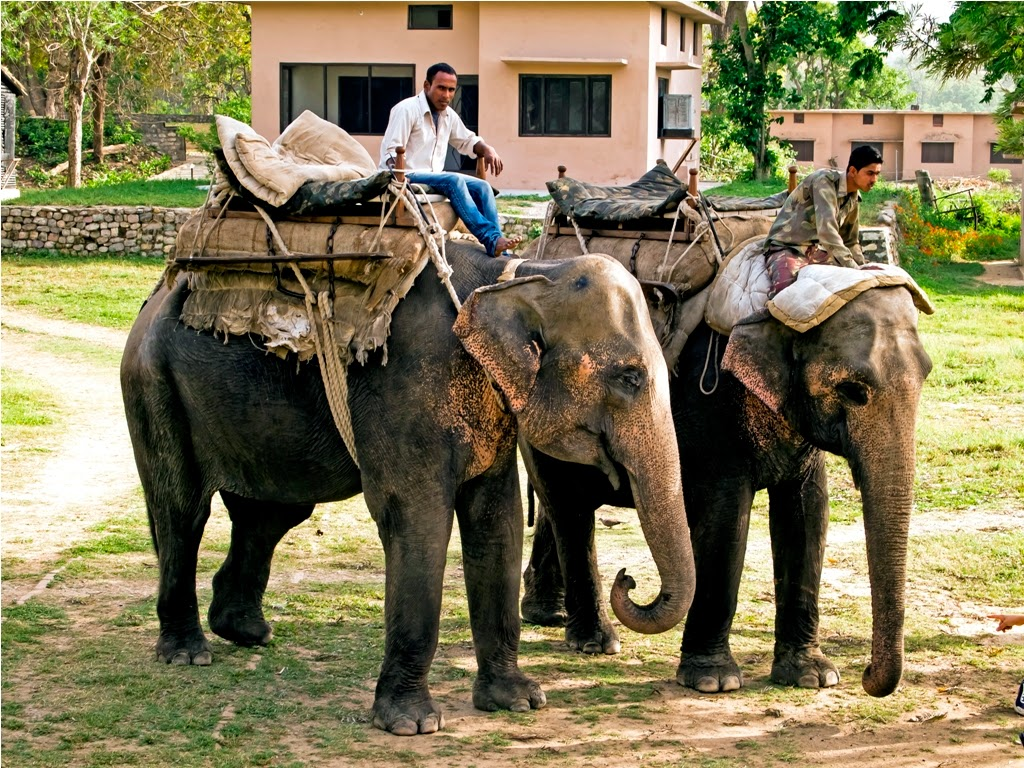 Elephant Ride: Jim Corbett National Park