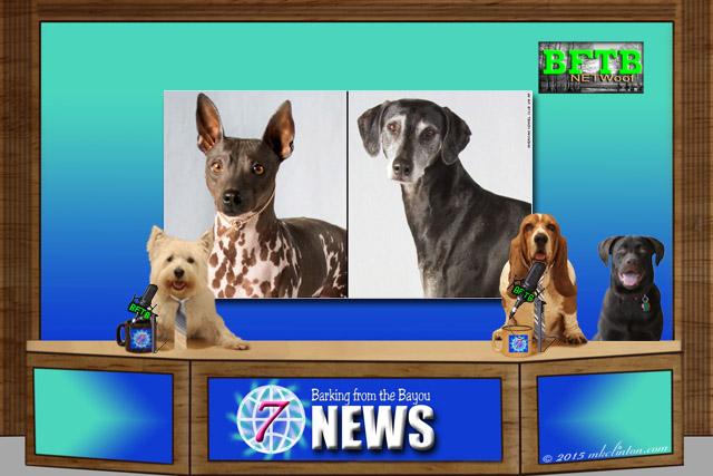 BFTB NETWoof News screen of new AKC dogs
