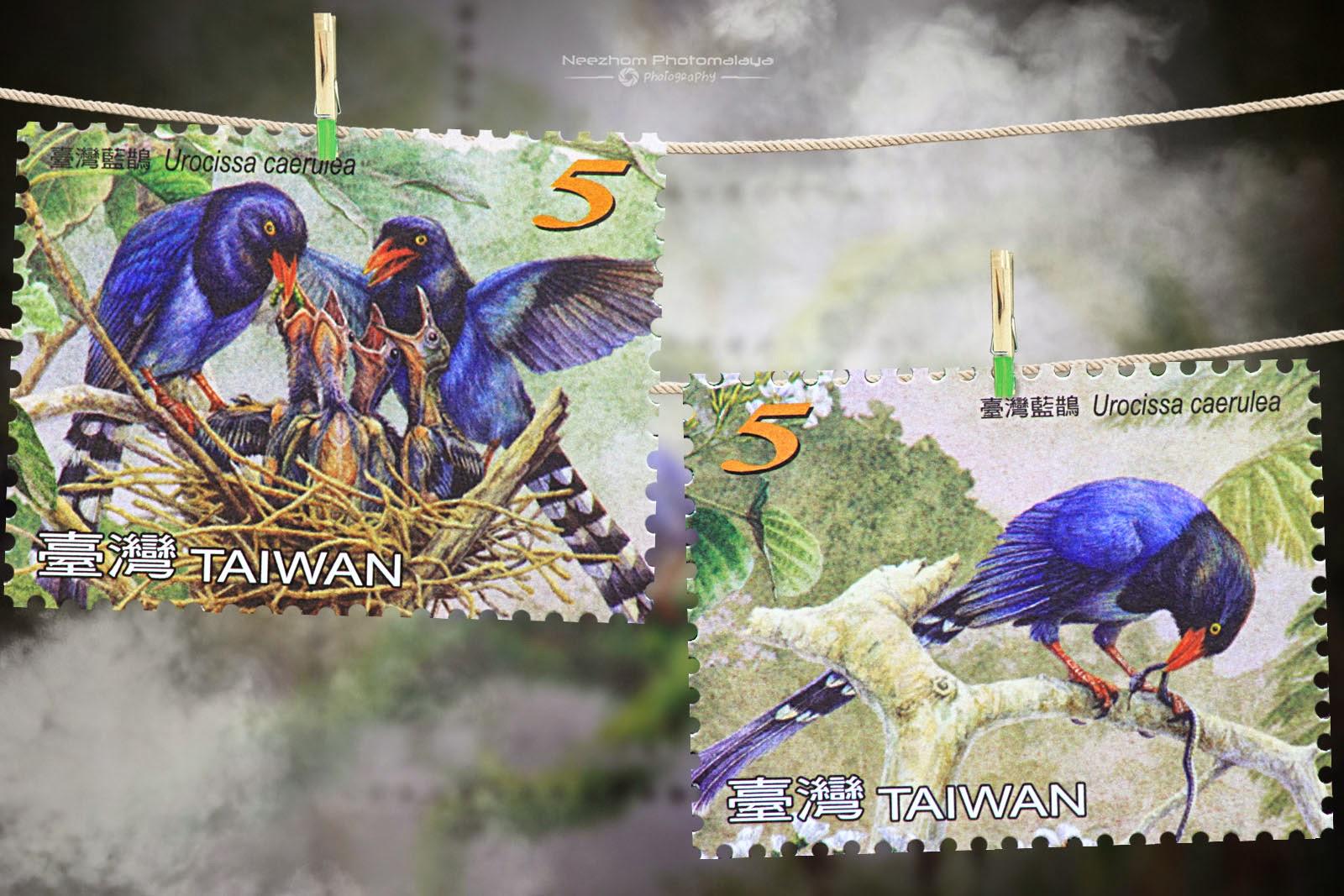 Taiwan 2008 Blue Magpie stamp - Urocissa caerulea NT$5