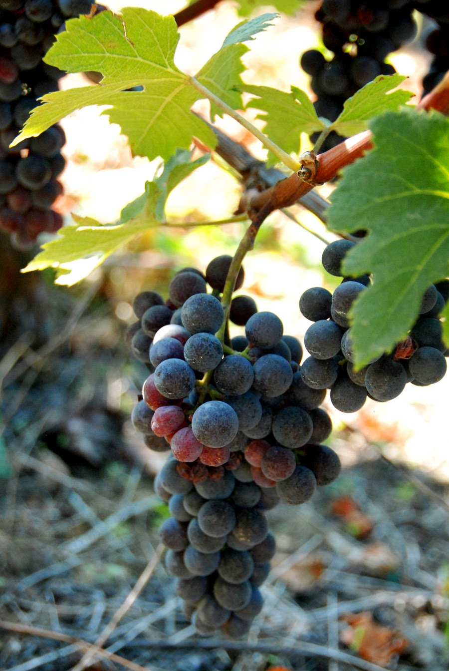 Неделя по винодельням (Пьемонт)