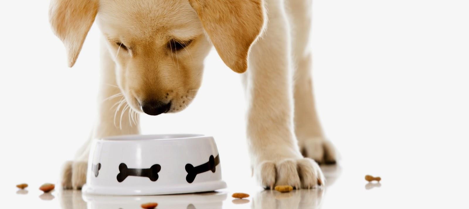 Risultati immagini per cane che mangia ciotola