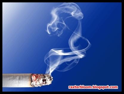 Berbagai Racun Berbahaya yang Terdapat pada Rokok - raxterbloom.blogspot.com