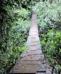 puente sobre arroyo