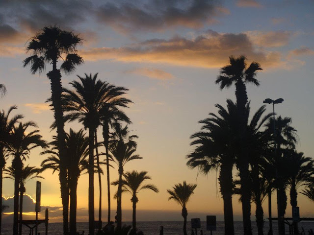 tenerife palm trees magic sunset