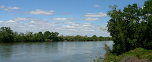 Springtime along the Sacramento
