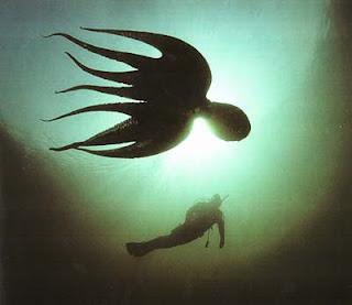 Плывущий гигантский осьминог