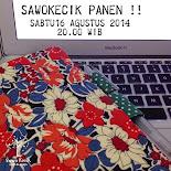 SawoKecik Panen !!