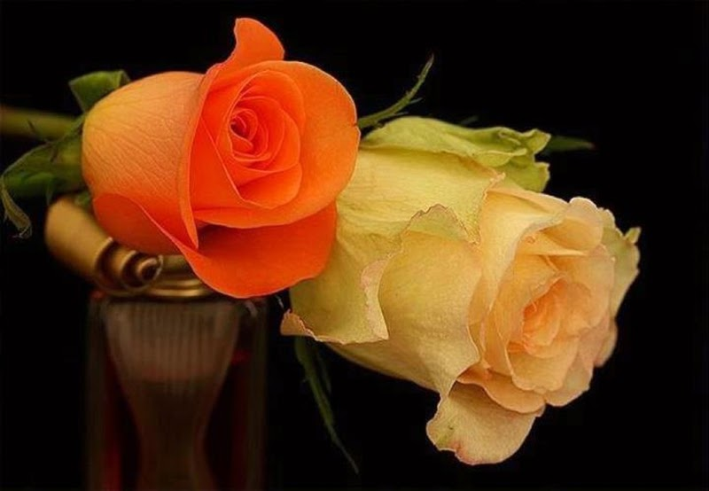 Beautiful Yellow Orange Rose Flowers for PC and Laptop Desktop Backgrounds Online free delivery