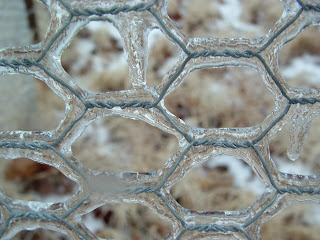chicken wire encased in ice