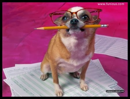 funny Cute dog preparing for  Final exam