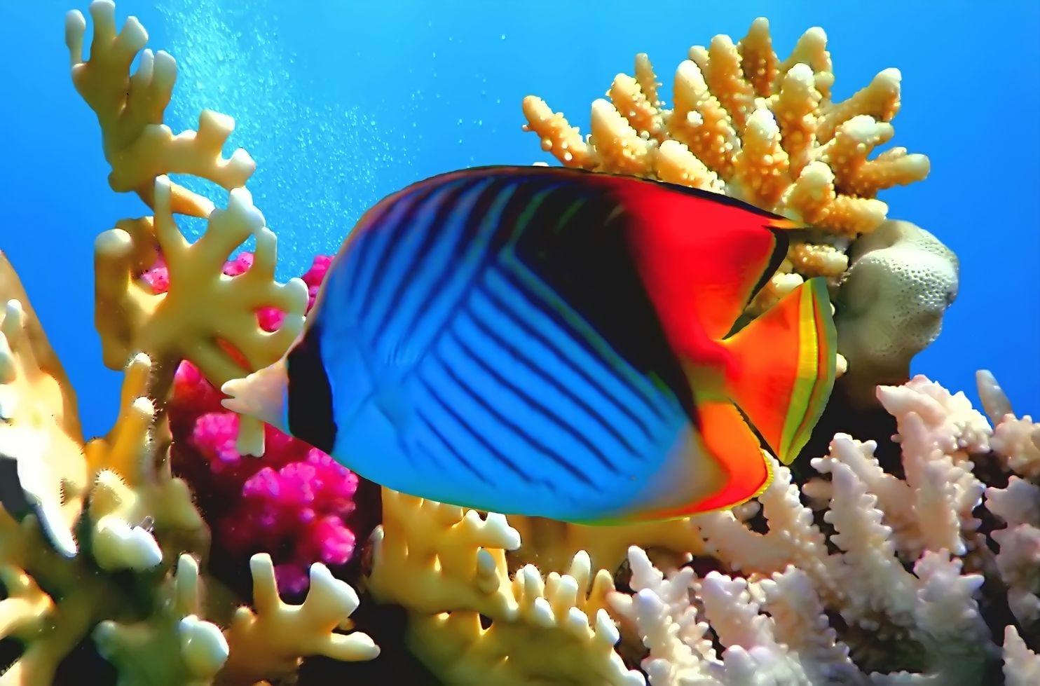 Entre peces y corales under the sea on pinterest coral - Fotos de peces tropicales ...