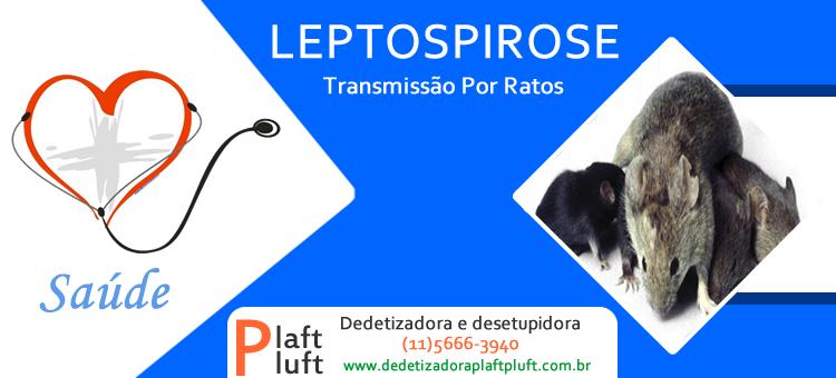 Sintomas e Tratamentos da Leptospirose transmitida por Ratos
