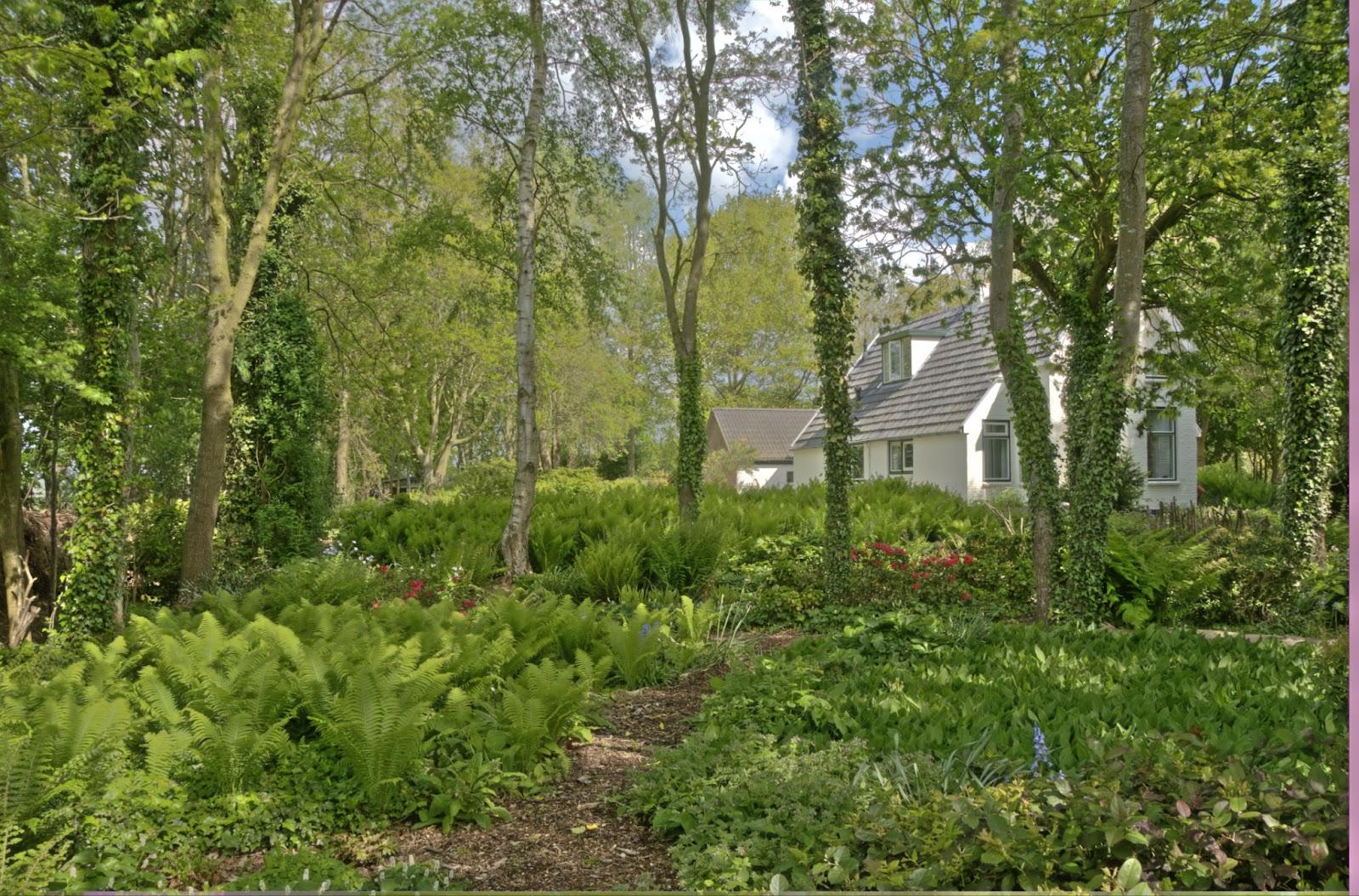 jan wilde een tuin juni 2012