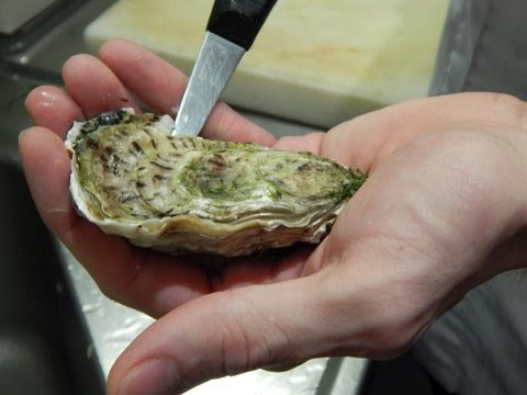 raw oysters in amsterdam