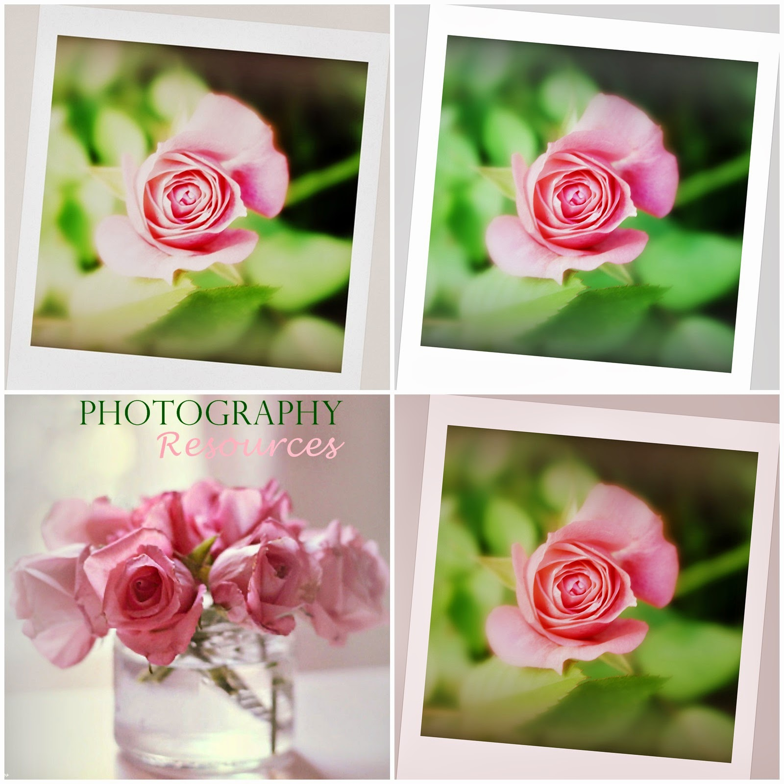 free photography resources roses collage