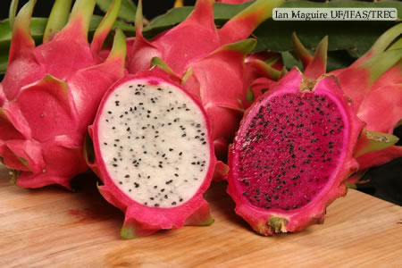dragon fruit in spanish is it healthy to just eat fruit