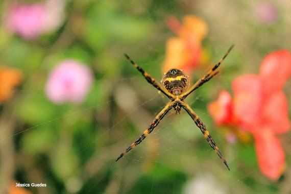 Aranha no jardim - Fotografia de Jéssica Guedes - Direitos autorais reservados
