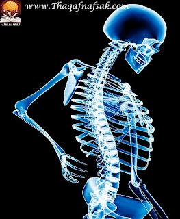 grey نصائح لعظام أقوى