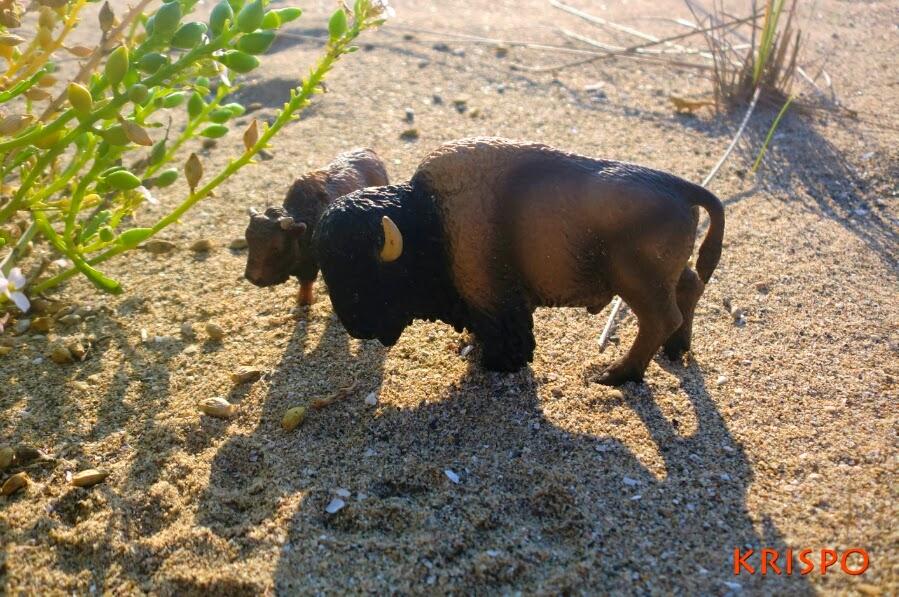dos bufalos pastando en miniatura