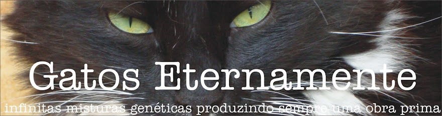 Eternamente Gatos