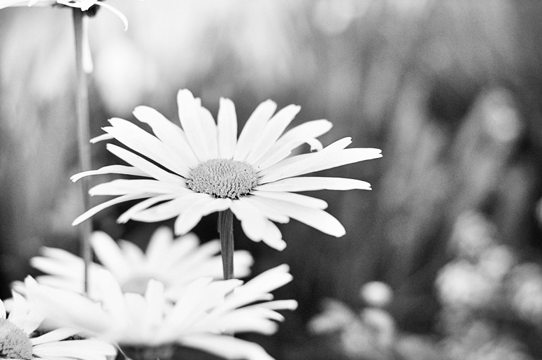 black and white pictures of flowers