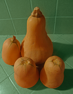 Three Small and One Large Butternut Squash