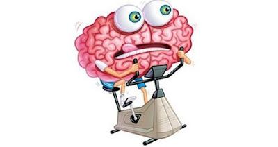 Tu cerebro en acción