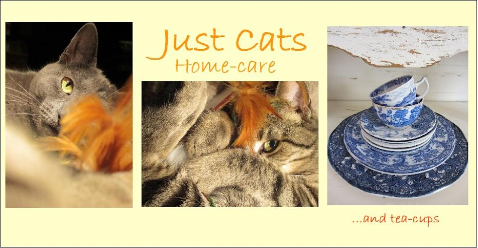 Welcome to Just Cats In-home Cat Care